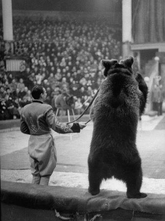 thomas-d-mcavoy-dancing-bear-at-the-circus