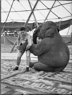 wrestler and elephant